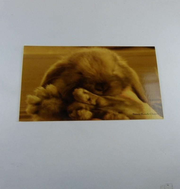 Briefkaart Hangoor Konijn Chantyplacecom